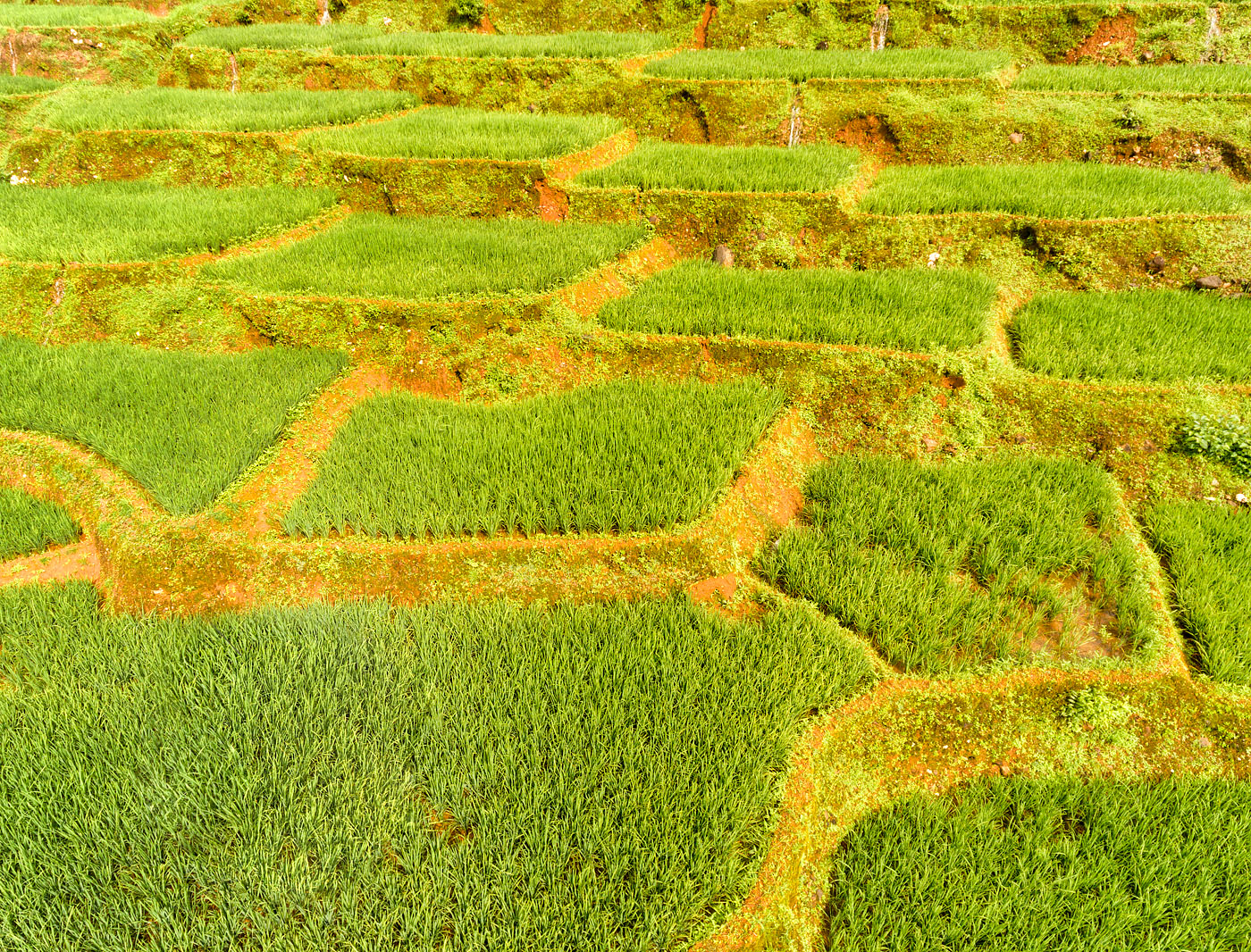 Terraced fields in Khola, Canacona, Goa