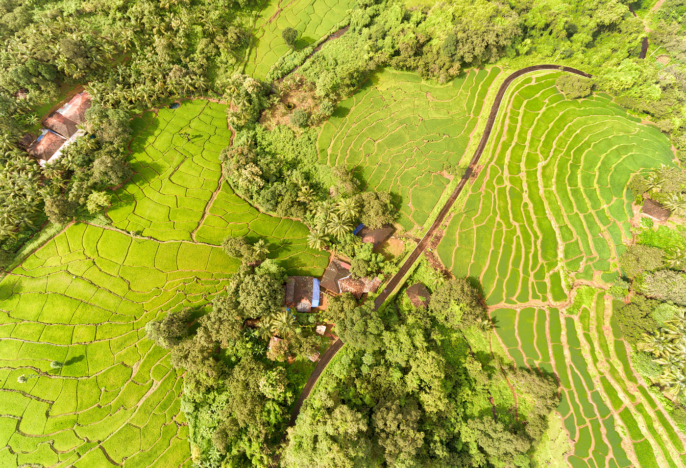 Terraced fields in Khola