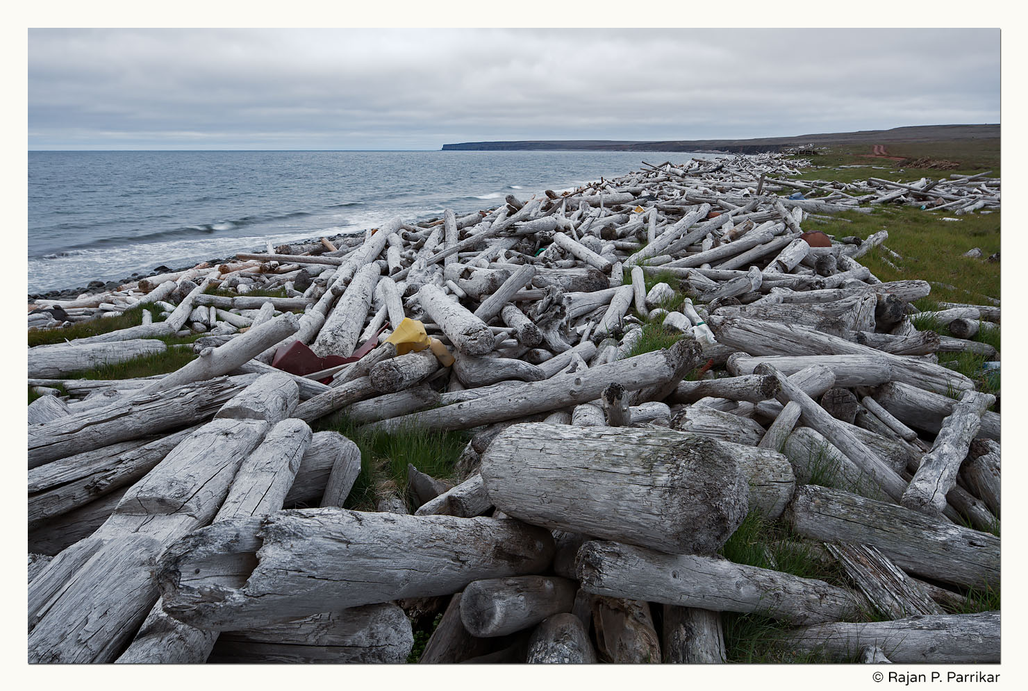 Driftwood in Langanes, Iceland