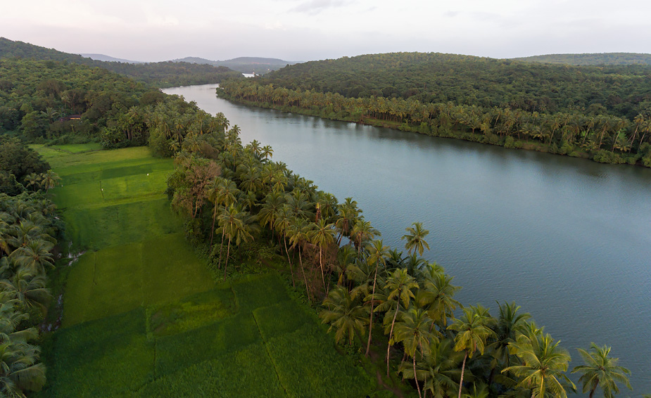 Chapora River and fields near Dhargalim, Goa