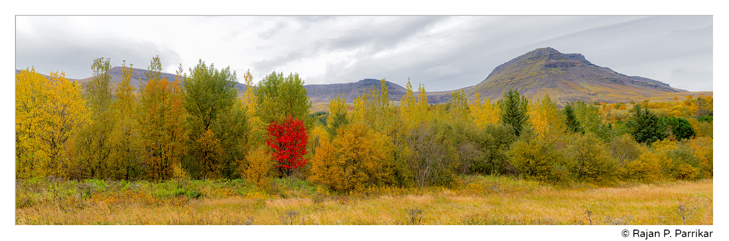 Fall colour and Esja