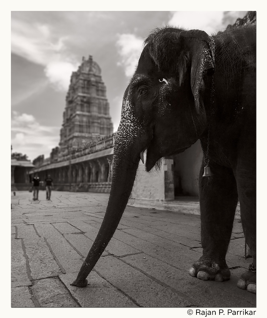 Lakshmi the elephant at Virupaksha temple