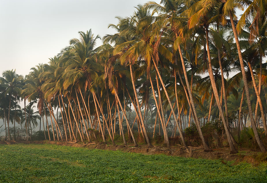 Morning in Batim, Goa