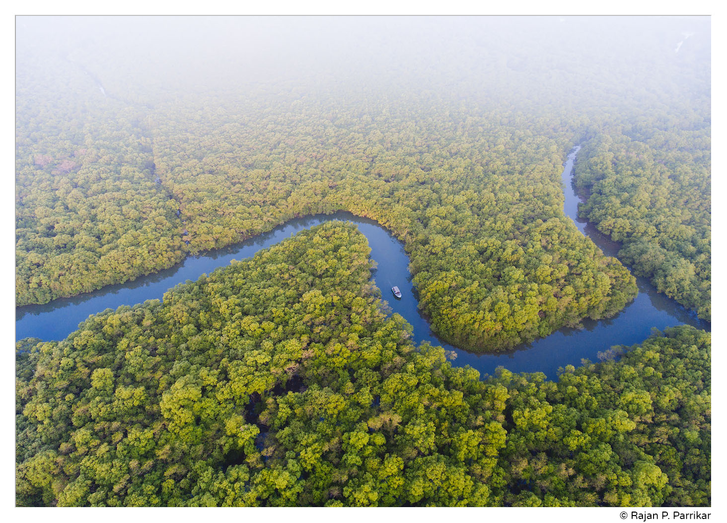 Mangroves of Chorão, Goa
