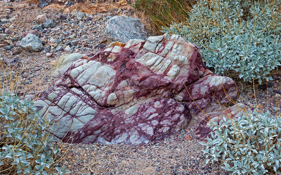 Bleeding rock