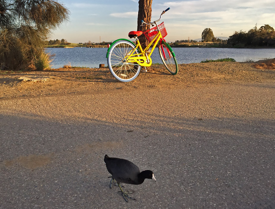 Google Bike, Shoreline Park, Mountain View