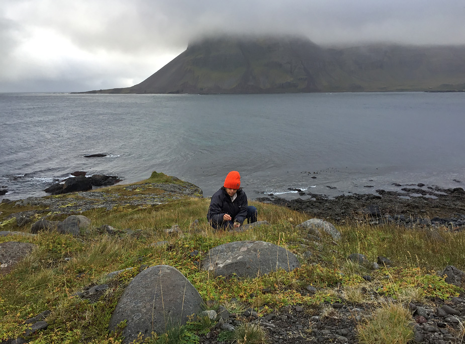 Veena picking wild crowberries in Kaldbaksvík, Strandir, Iceland