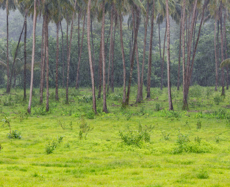 Forest meadow in Valpoi, Goa